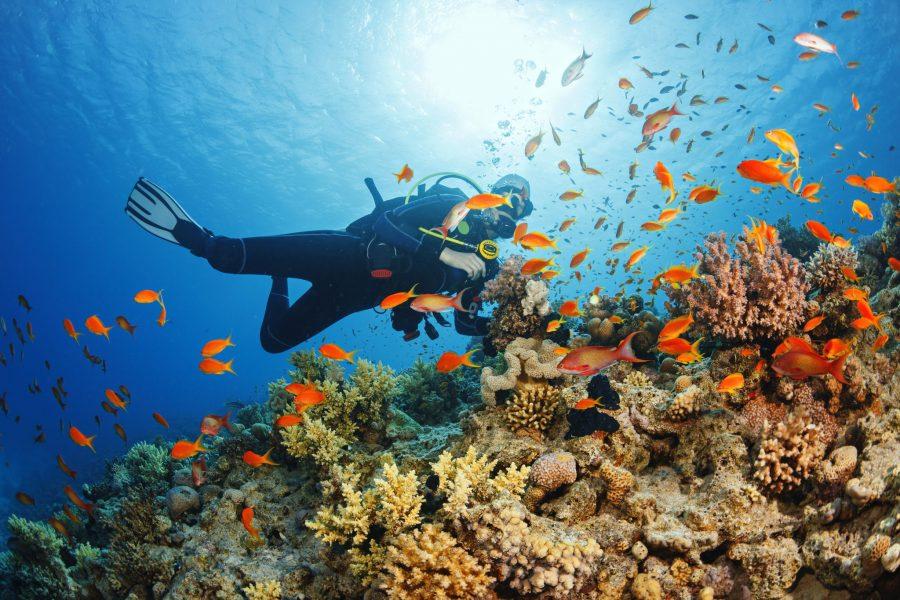 Zanzibar - A diving Paradise